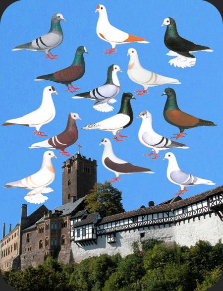 Poster: Tauben vor der Wartburg